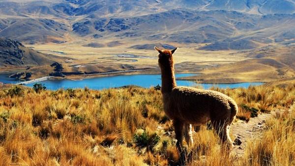 Pacotes para o Peru | Zarpo