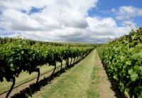 Murdoch James: Visitando uma vinícola na Nova Zelândia
