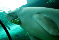 O Aquário de Sydney e seus 13 mil animais