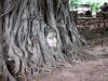 Cabeça de Buda decapitado entre as raízes de uma árvore em Ayutthaya