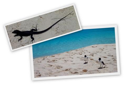 Visitantes das praias de Los Roques