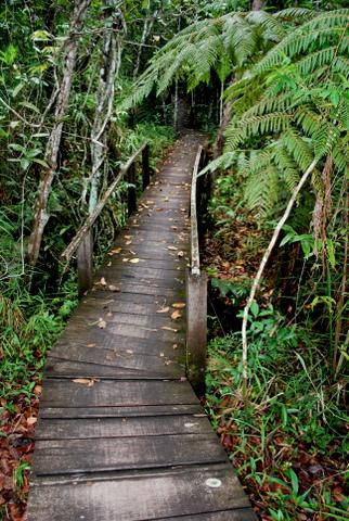 Cachoeira de São Bento - A Trilha