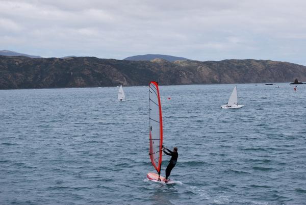Passeio de Barco em Wellington | Nova Zelândia | 3