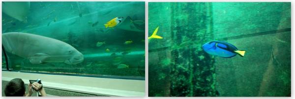 Aquario de Sidney (2)