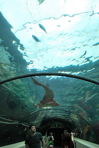 Aquario de Sidney (3)