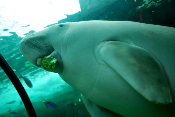 Aquario de Sidney (4)