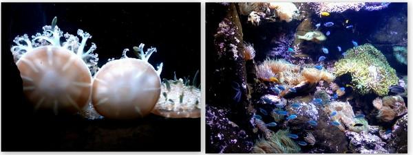 Aquario de Sidney (5)