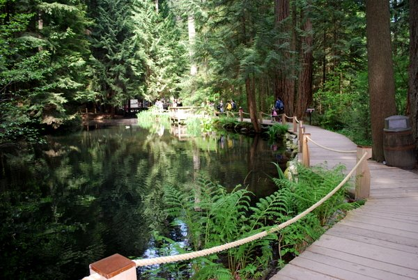 Capilano Suspension Bridge | Vancouver | Parque