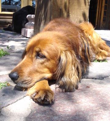 Cachorros em Santiago | Eles são lindos e estão por toda parte