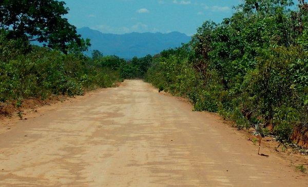 Estrada para Cavalcante | Poeira, sol e nossa amiga Siriema