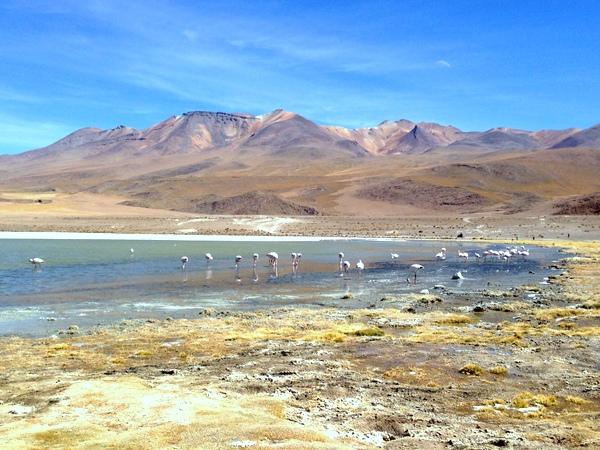 Salar de Uyuni | Lagoa + Flamingos + Vulcões