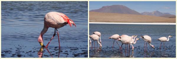 Sala de Uyuni | Flamingos