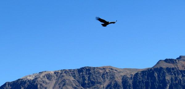 Cânion Del Colca | Cruz del Condor