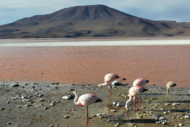 Laguna Colorada (2)